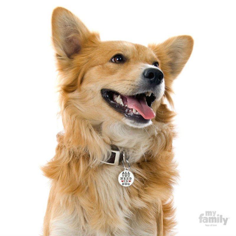 ΤΑΥΤΟΤΗΤΑ ΣΚΥΛΟΥ MY FAMILY CHARMS ALL YOU NEED IS DOG ΤΑΥΤΟΤΗΤΕΣ