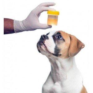 Ουρολογικές Παθήσεις για Σκύλους