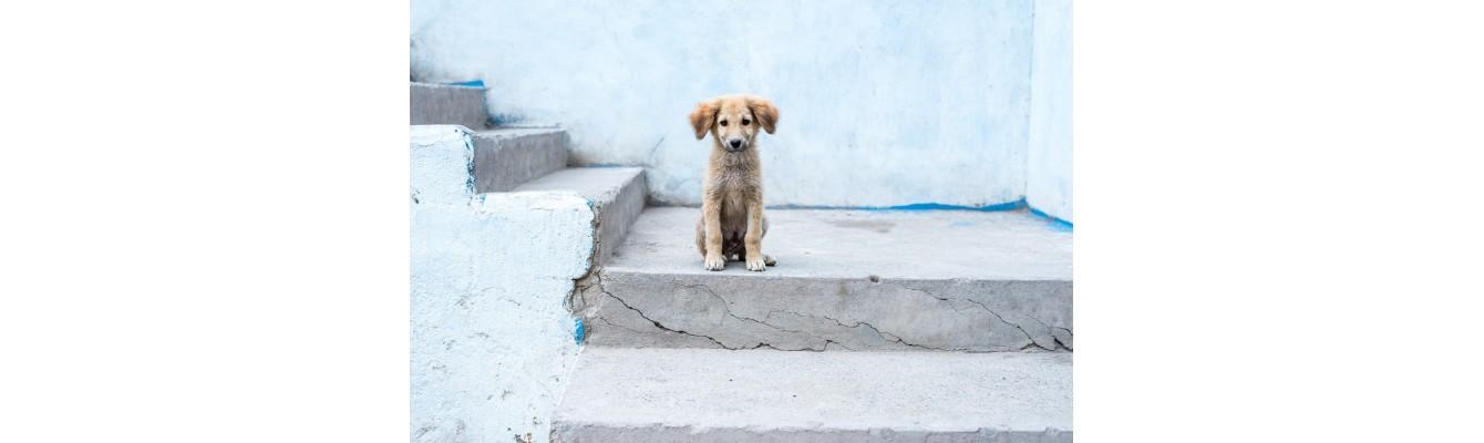 Αδέσποτα Ζώα: Τι πρέπει να κάνουμε νομικά αλλά και ηθικά