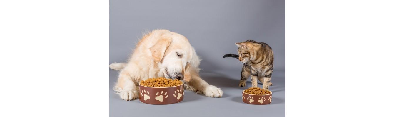 2+1 εσφαλμένες αντιλήψεις για τη διατροφή του σκύλου ή της γάτας σας