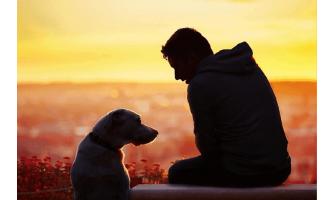Σκύλος και Μύθοι