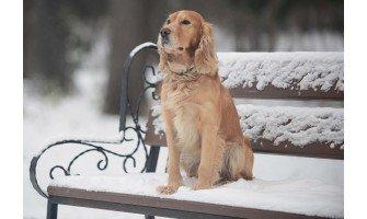 14 τρόποι να προστατεύσετε το σκύλο σας το χειμώνα.