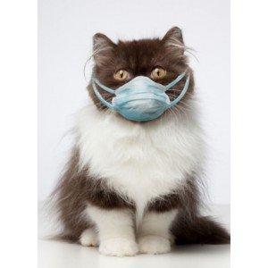 Αλλεργίες & Δυσανεξίες σε Γάτα