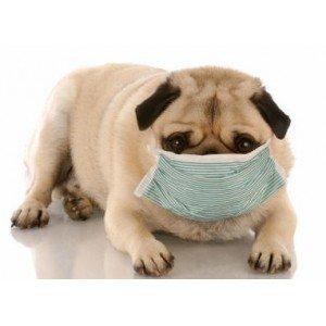 Αλλεργίες & Δυσανεξίες σε σκύλο