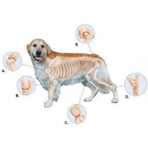 Αρθρώσεις και Οστά για Σκύλους