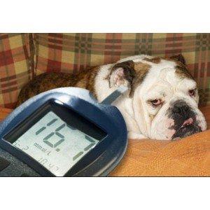 Σακχαρώδης Διαβήτης σε Σκύλο