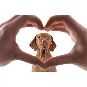Καρδιακές Παθήσεις για Σκύλους