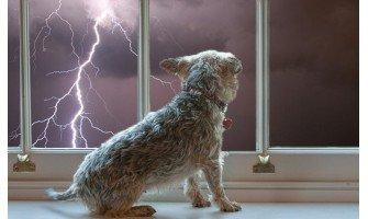 Μερικές συμβουλές για να ηρεμήσετε το σκύλο σας κατά τη διάρκεια μιας καταιγίδας