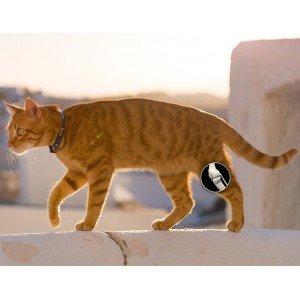 Αρθρώσεις και Οστά για Γάτες