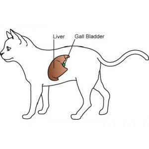 Ηπατική ανεπάρκεια σε Γάτα