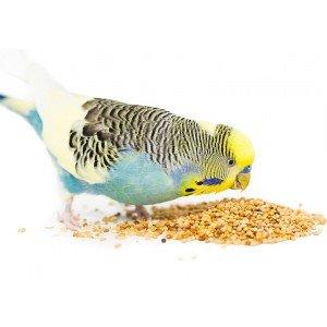 Τροφές για Παπαγάλους