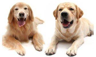 Προκαλεί τελικά η στείρωση στους σκύλους αύξηση βάρους ;